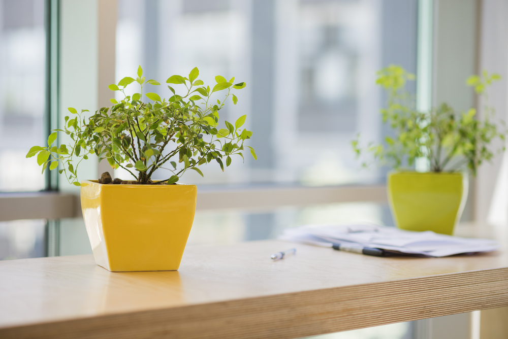 potted-plants-office
