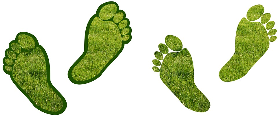 How Can my Company Reduce it's Carbon Footprint?