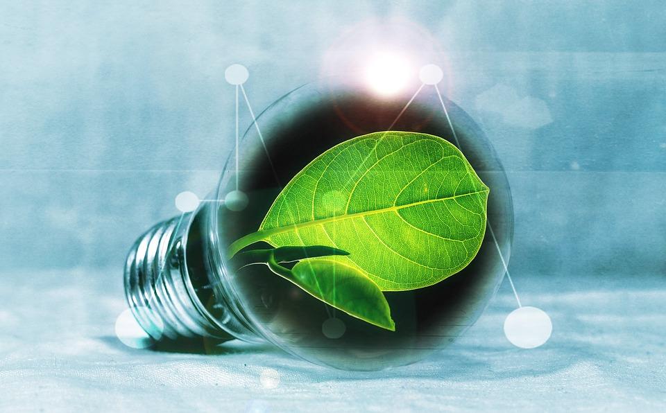 Eco-Friendly Companies
