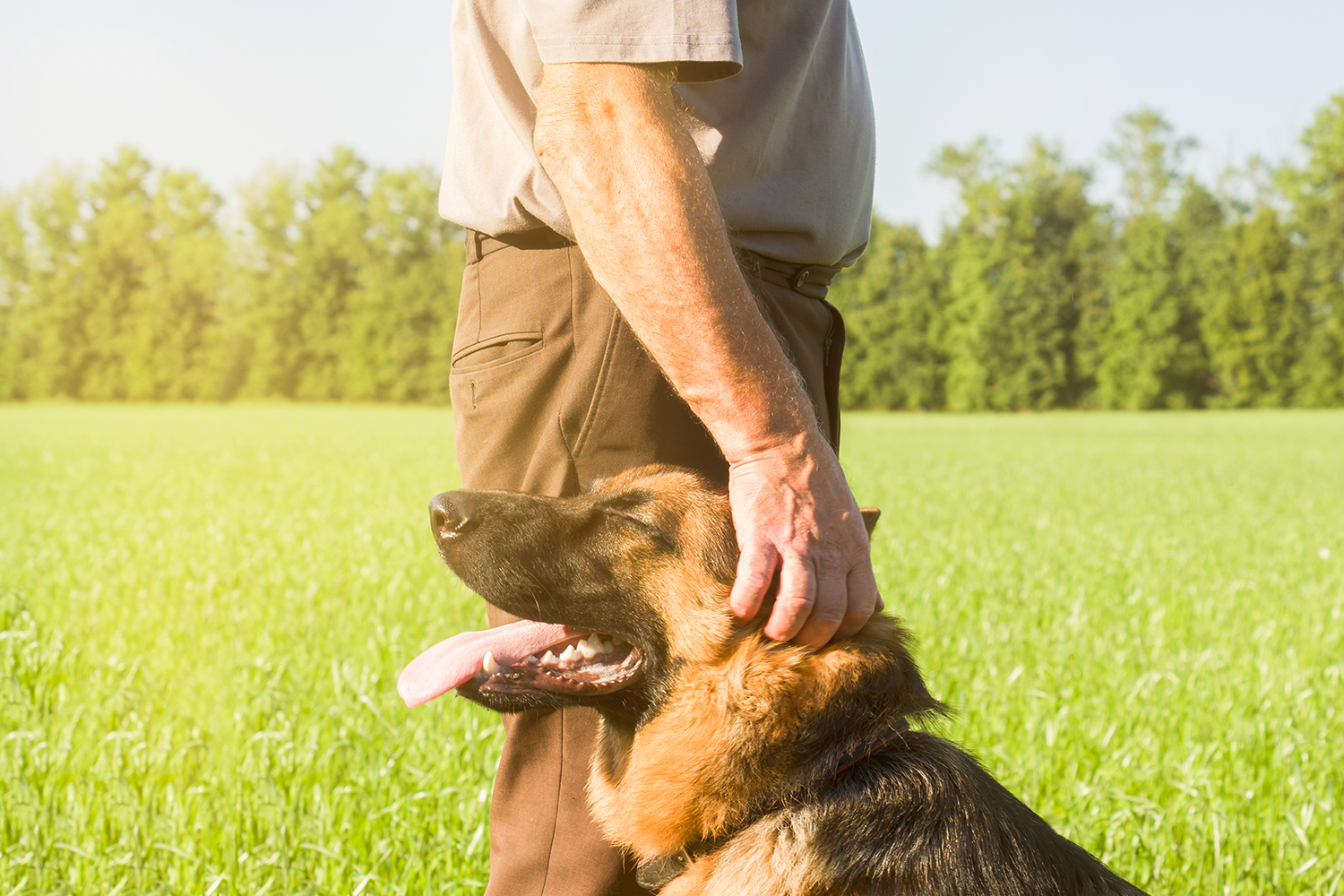 What Does Dog Handling Involve?
